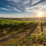 The Wine Regions of Italy